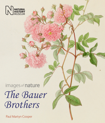 The Bauer Brothers