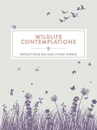 Wildlife Contemplations