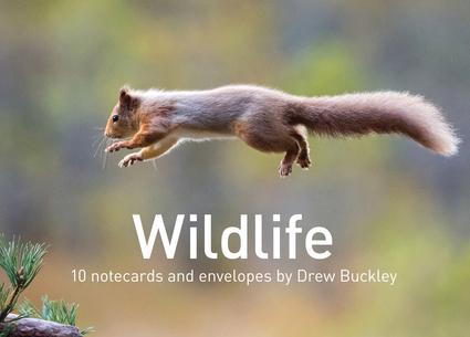 Wildlife by Drew Buckley Notecards