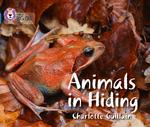 Animals in Hiding