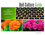 Ball Culture Guide