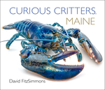 Curious Critters Maine