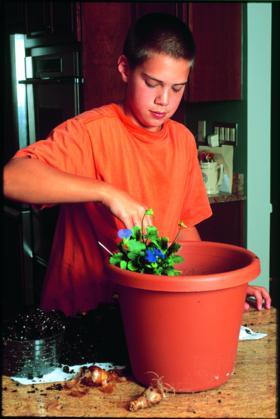 Kids' Container GardeningKids' Container Gardening | Alt 3