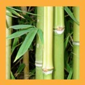 Lucky Bamboo Crafts